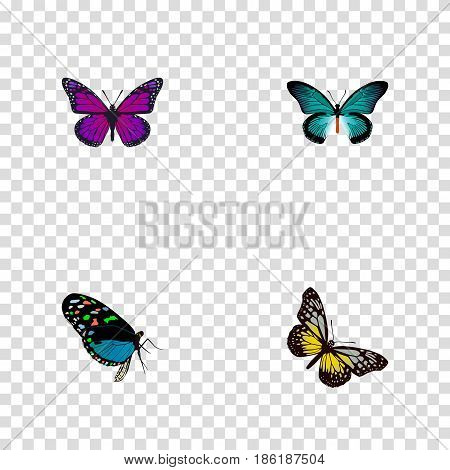 Realistic Hairstreak, Purple Monarch, Pipevine And Other Vector Elements. Set Of Beauty Realistic Symbols Also Includes Purple, Beauty, Blue Objects.