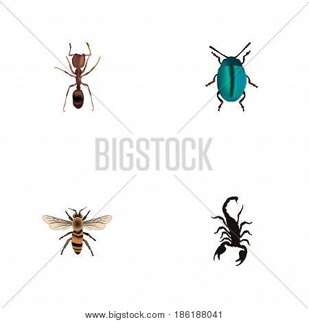 Realistic Wisp, Poisonous, Bug And Other Vector Elements. Set Of Bug Realistic Symbols Also Includes Bug, Blue, Poisonous Objects.