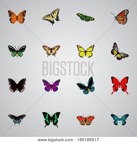 Realistic Spicebush, Danaus Plexippus, Tropical Moth And Other Vector Elements. Set Of Beauty Realistic Symbols Also Includes Sky, Purple, Moth Objects.