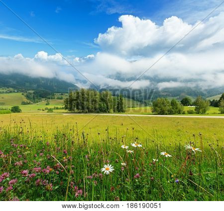 Alps Meadow Summer View