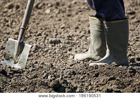 Spring work in the garden. People in rubber boots preparing the beds for planting. Man digging with a shovel.
