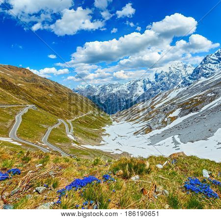 Summer Stelvio Pass (italy) And Flowers