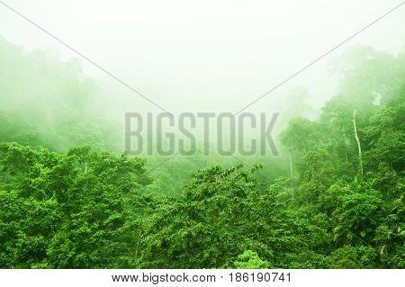 Mountain range view in foggy morning, tropical dense jungle.
