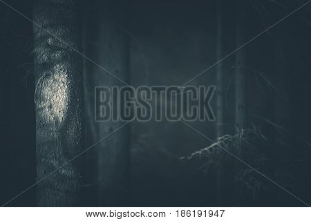 Spooky Dark Forest Closeup Photo. Dark Bluish Color Grading. Creepy Mystery Forest Background