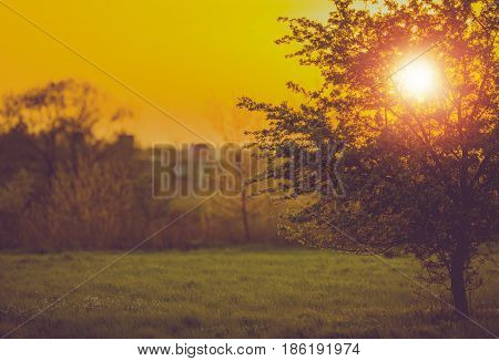 Sunset and the Tree. Spring Vegetation Concept Photo. Spring Meadow.
