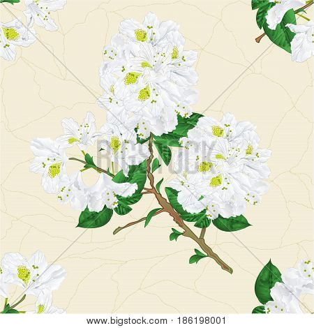 Seamless texture twig white rhododendron mountain shrub cracks in the porcelain vintage hand draw vector illustration