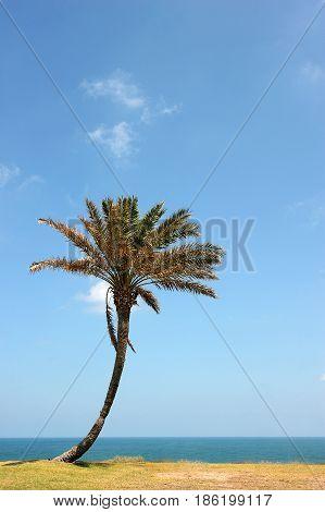 Park Of Ashkelon In Israel