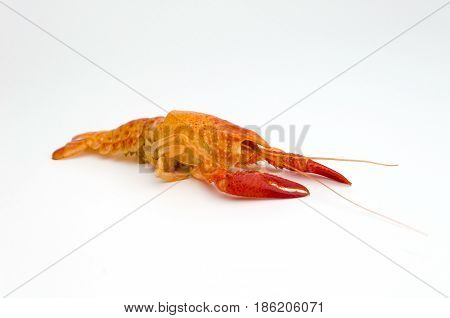 Molt Of Orange Shrimp Or Orange Crayfish Isolated On White Background