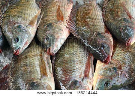 Close-up group of tilapia fish in the market