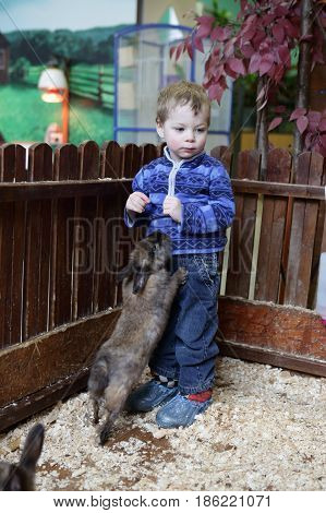 Child playing with rabbits on the farm