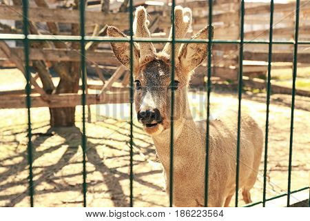 Enclosure with cute young deer on farm