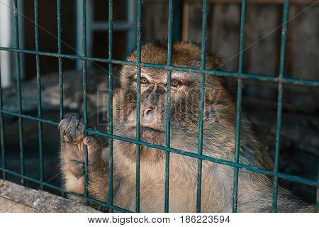 Cute monkey sitting in cage on farm