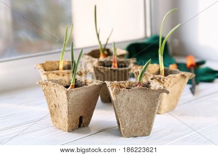 Plant cultivation on white wooden window sill