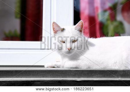Cat lying on windowsill outdoor