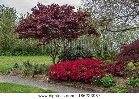 A veiw of trees and flowers at Hamilton Viewpoint Park in West Seattle Washington.
