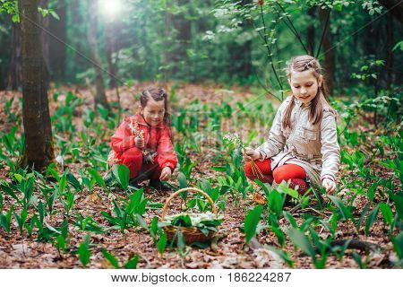two little cute sisters girls collect bouquets of lilies of the valley in the woods on a sunny day