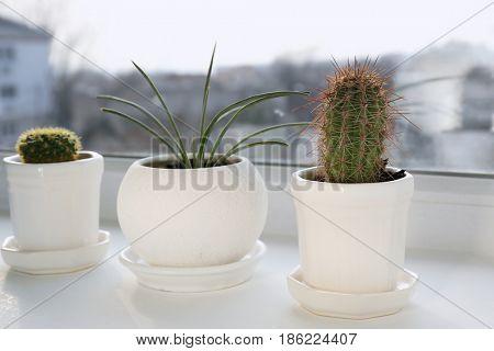 Plants in pots on white window sill