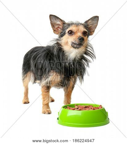 Cute little pet and bowl with dog food isolated on white