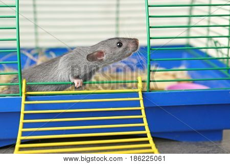 Cute funny rat in cage at home