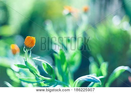 The spring background with beautiful yellow flowers