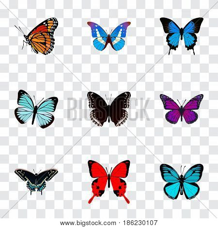 Realistic Lexias, Milkweed, Spicebush And Other Vector Elements. Set Of Beauty Realistic Symbols Also Includes Sky, Bluewing, Cypris Objects.