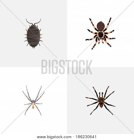 Realistic Dor, Tarantula, Arachnid And Other Vector Elements. Set Of Animal Realistic Symbols Also Includes Dor, Bug, Beetle Objects.