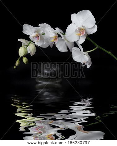 White orchid phalaenopsis flower covered with water drops and stones for massage on a black background reflected in a water surface with small waves