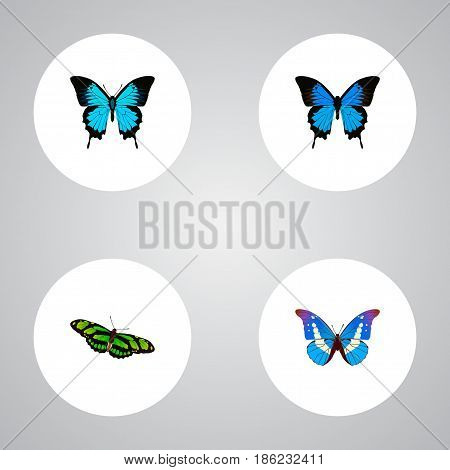 Realistic Bluewing, Green Peacock, Common Blue And Other Vector Elements. Set Of Beauty Realistic Symbols Also Includes Green, Butterfly, Morpho Objects.