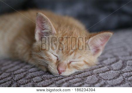 Pets / Kittens / The kitten is asleep