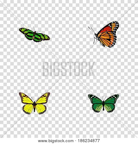 Realistic Archippus, Green Peacock, Birdwing And Other Vector Elements. Set Of Moth Realistic Symbols Also Includes Brown, Butterfly, Monarch Objects.