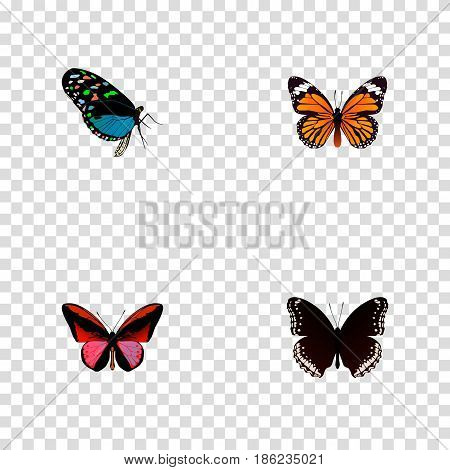 Realistic Callicore Cynosura, Monarch, Hairstreak And Other Vector Elements. Set Of Beauty Realistic Symbols Also Includes Black, Monarch, Butterfly Objects.