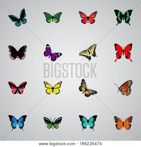 Realistic Birdwing, Common Blue, Butterfly And Other Vector Elements. Set Of Beautiful Realistic Symbols Also Includes Tiger, Brown, Fly Objects.