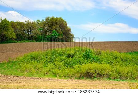 Green islands in the middle of a wide field with fertile land a glorious world of nature