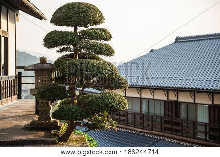 Traditional japanese tree in Magaome village, Japan
