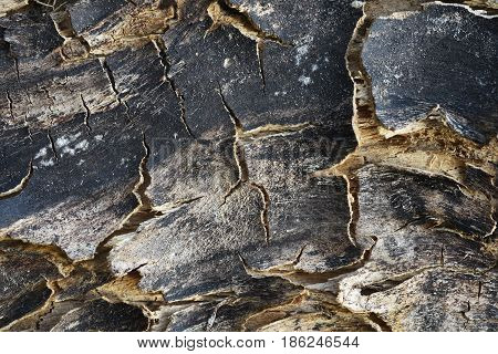 Cracked crusted bark of the burnt tree: brown in places sometimes black in color designer texture old tree.