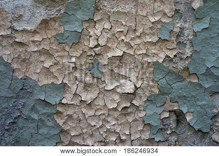 The old destroyed wall with two layers of cracked plaster: the bottom layer pinkish beige color the top layer blue and greenish with a fine crack a bright design texture.