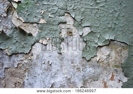 Pieces of old cracked greenish plaster on the whitened faded gypsum wall in the middle of a little emptiness for text an original design texture.