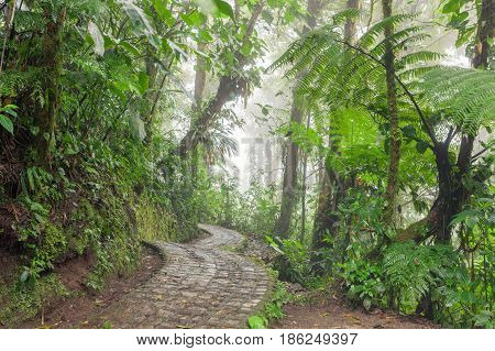 Stone path in Monteverde cloud forest Costa Rica