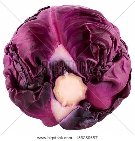 Isolated beautiful red savoy cabbage over white background