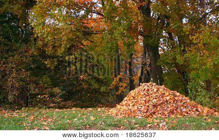 Pile of fallen leaves in a yard.