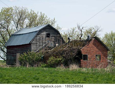 Abandoned ruined house and barn, amish neighborhood