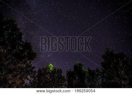 Blue Dark Night Sky With Many Stars Above Field Of Trees.
