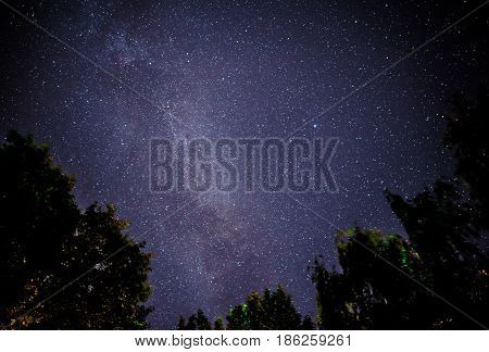 Starry Sky And Trees In The Foreground