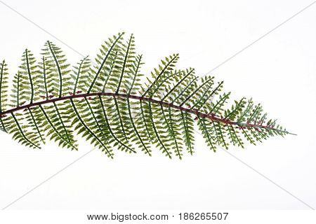 Close up green leaves isolated on white background