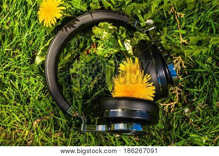 wireless travel headphones on lawn with dandelions