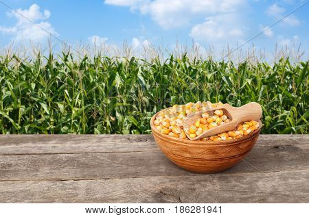 dry corn seeds in bowl with scoop on wooden table with green field on the background. Agriculture and harvest concept. Maize with maize field background
