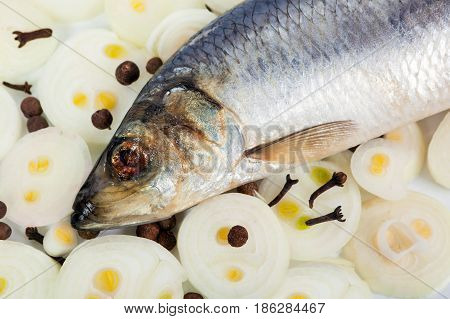 Herring with onions and spices close up