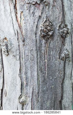 Closeup to Surface of Old Bark of Tree