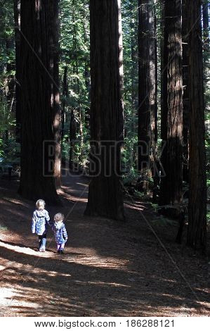 Two sisters (Age 07 and 03) travel and hikes in Giant the Redwoods forest in Rotorua North Island New Zealand.