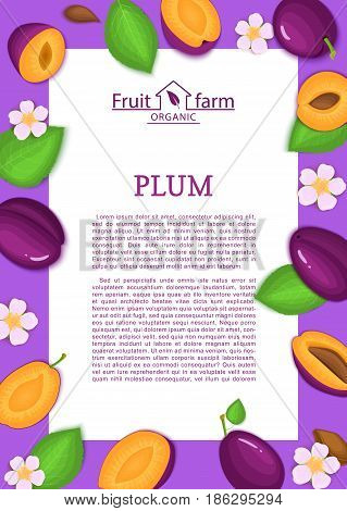Rectangle purple frame and cartoon plum fruit leaves and flower. Vector card illustration. Ripe and juicy flowering, blossom plums fruits for design of food packaging juice breakfast detox diet menu